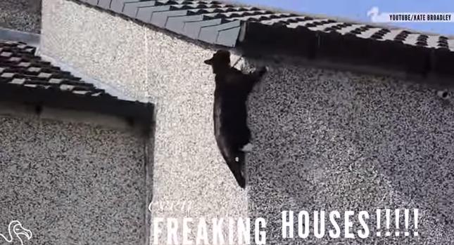 屋根までだっていけるんです!