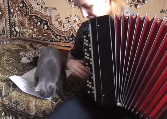 アコーディオンを弾くと。