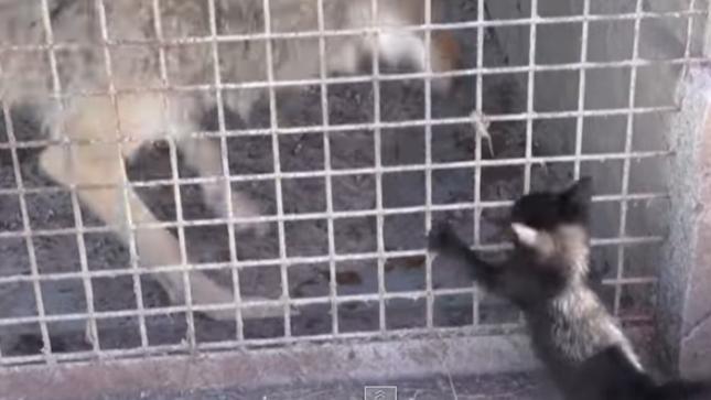 かと思ったら子猫パンチ!