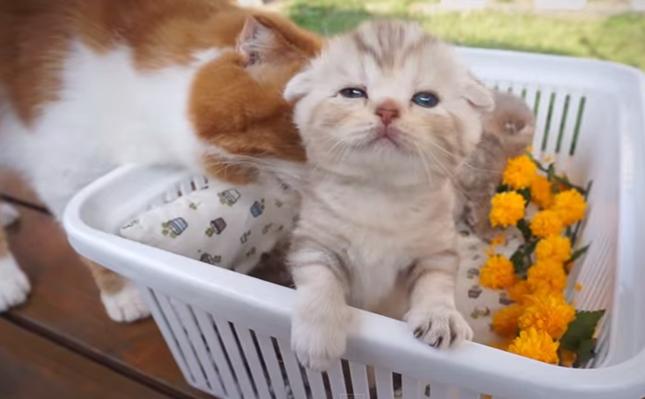 子猫達も満喫。