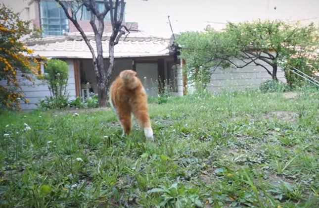 散歩いってきま~す♪