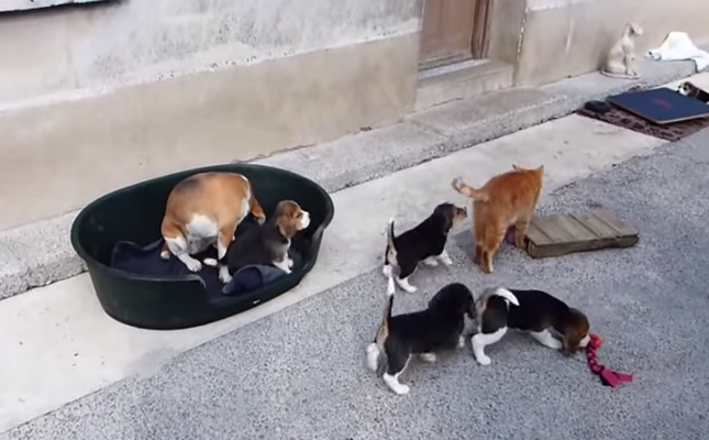 猫に興味津津な子犬たち。