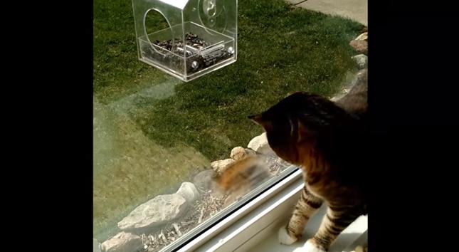 珍客に興味津々の猫。