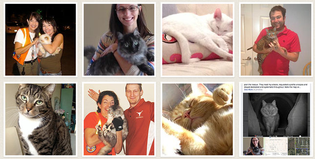 救助された猫達の画像(一部抜粋)
