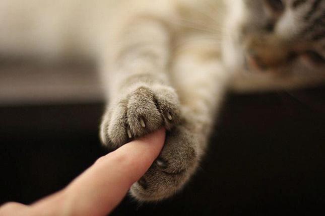 掴んでくる手。
