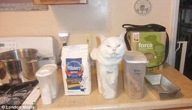 変な場所に入る猫たち。