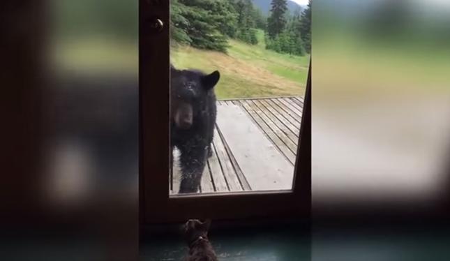 玄関に近づく熊。