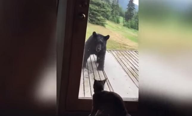 猫の動きに熊ビックリ!
