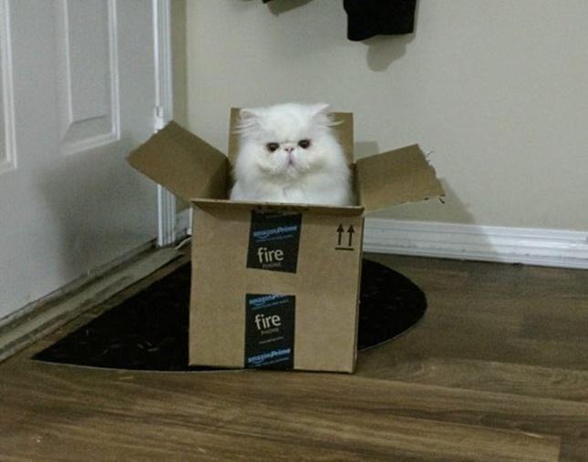 美猫でもあります!
