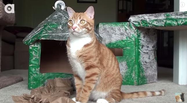 猫達も満足気な表情です。