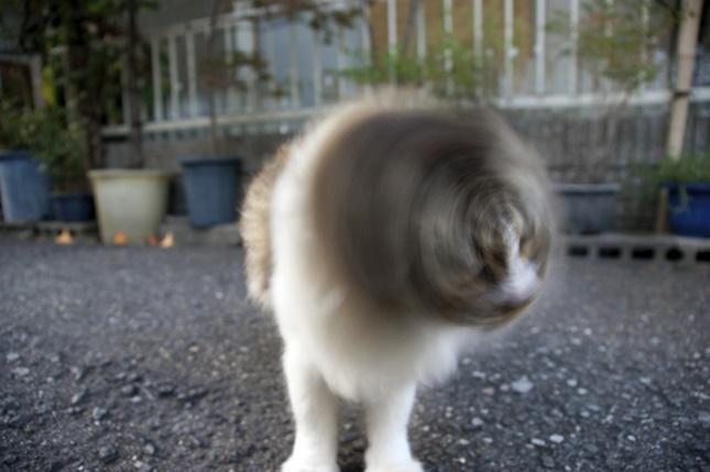 キタ!猫ドリル!