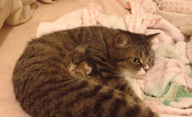 母猫で隠れんぼ?