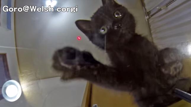 不思議そうに猫パンチ。