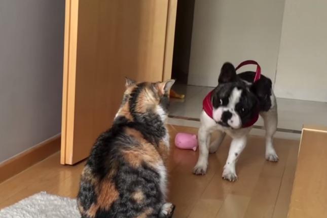 犬「遊ぼうぜ!!」