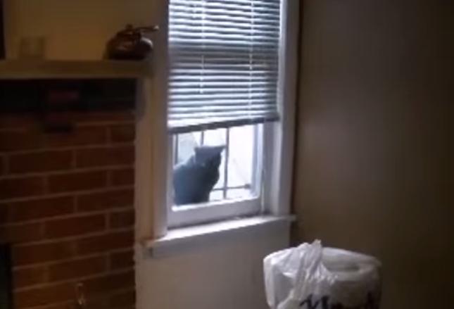 窓のそばにノラネコさん!