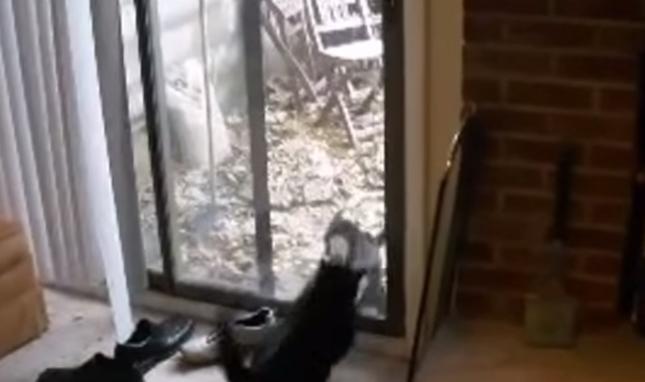 窓という窓で喧嘩勃発!