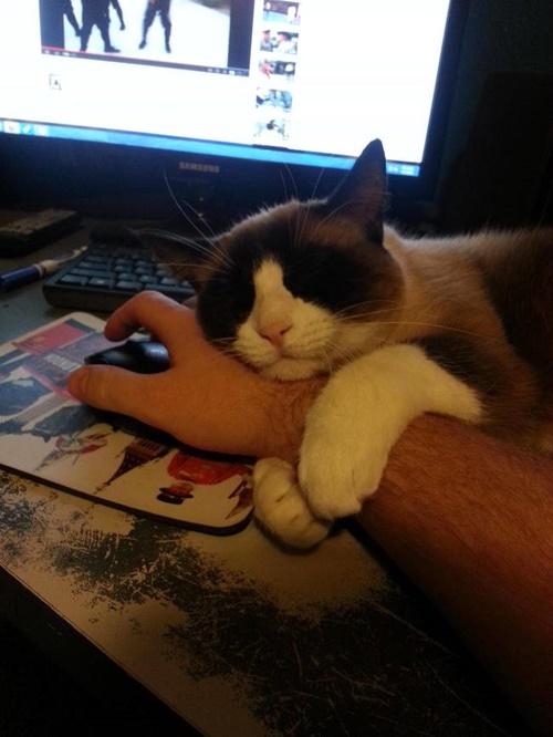 仕事しないでハグ。