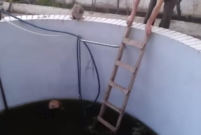 落ちた猫のためにはしごをかける。