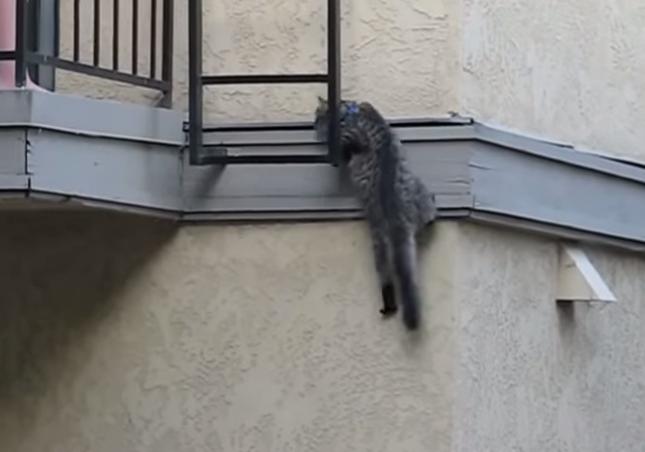 はしごにつかまり・・・