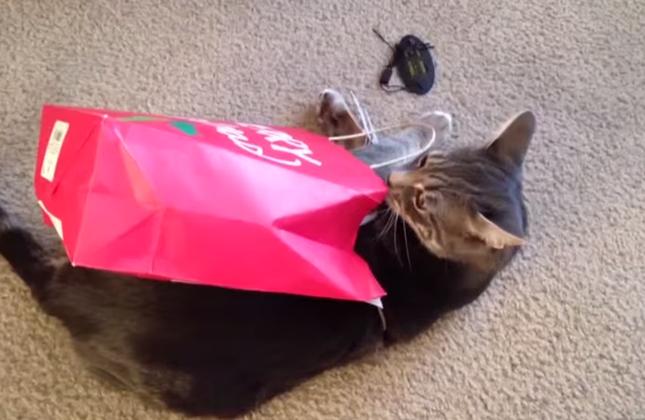 紙袋に捕まってしまった猫。