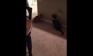 レーザー猫
