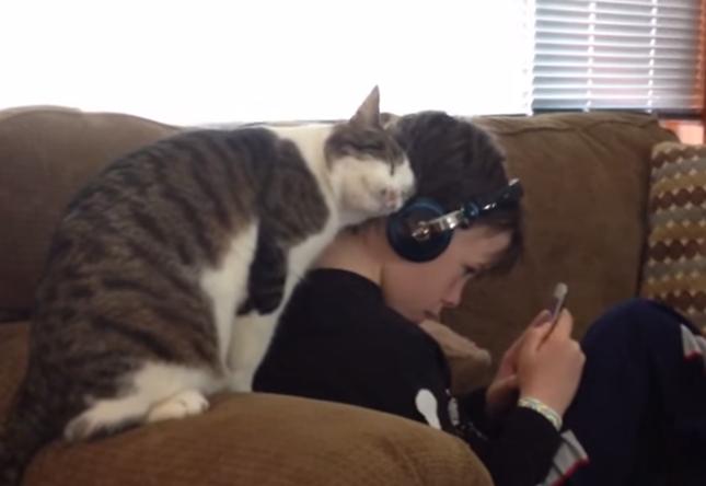 少年が大好きな猫。