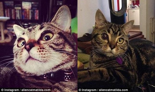 以前は普通の猫と変わりませんでした。