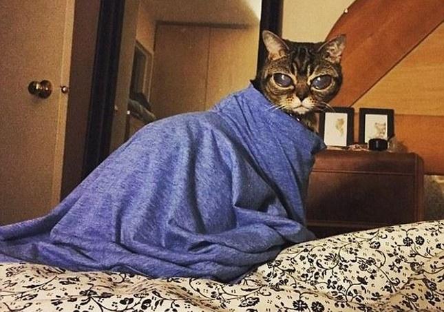 エイリアン猫と呼ばれるマチルダ