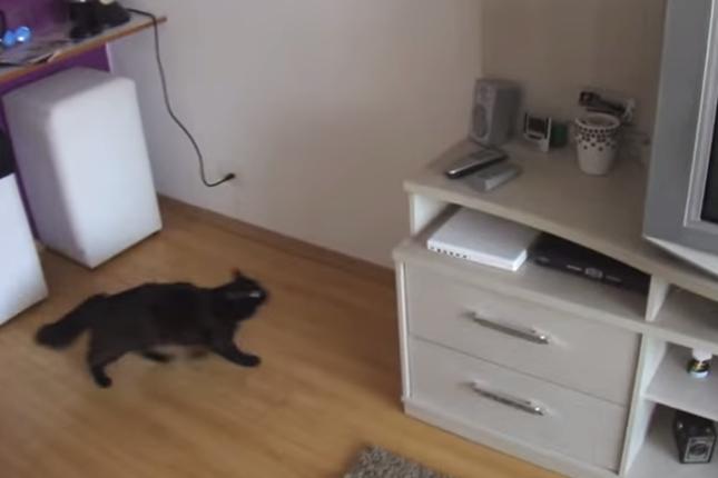 すぐさま出動する黒猫。
