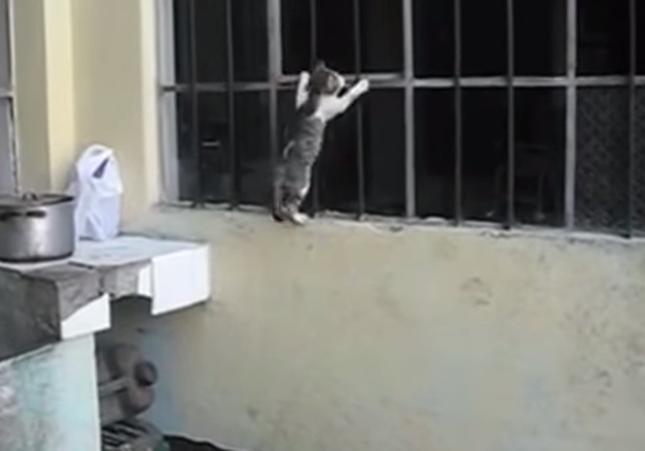 必死に壁を渡る子猫。