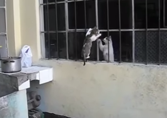 心配そうに見つめる母猫。
