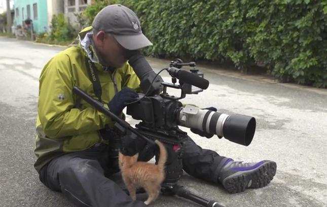 岩合さんに近づく子猫。