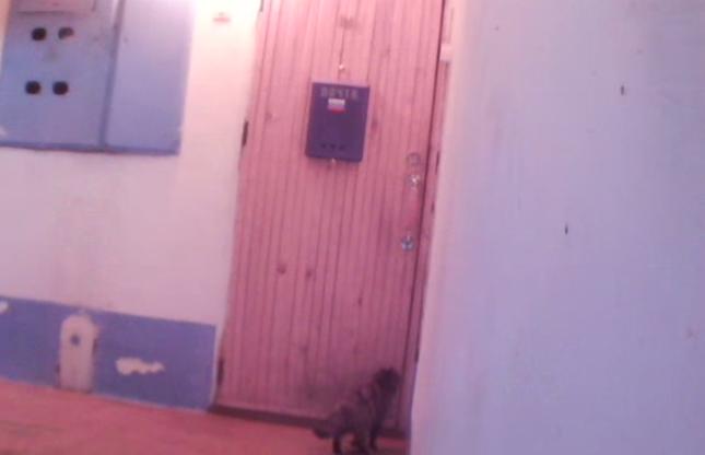 帰ってきた猫。