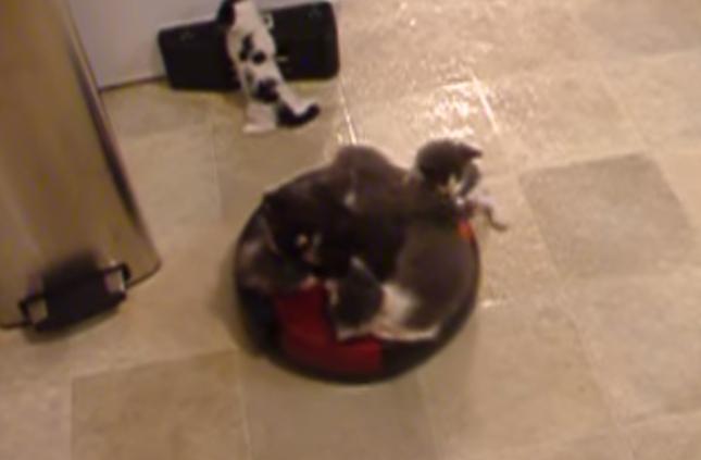 子猫山盛りルンバ。