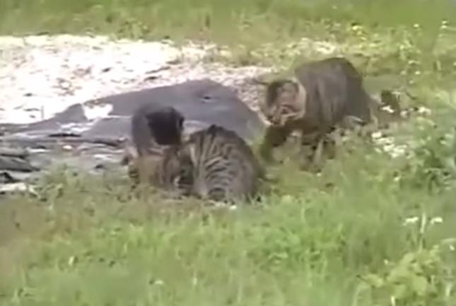 他の猫たちも興味津々。