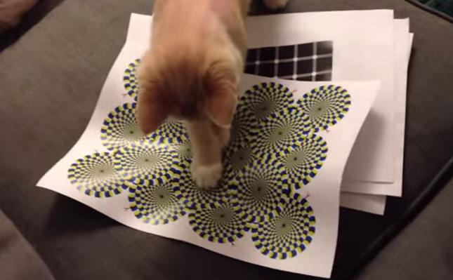 動く模様に猫パンチ!