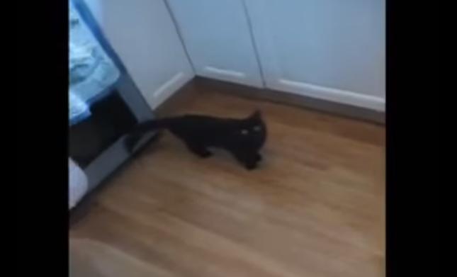 洗濯機の音を聞きつける子猫。