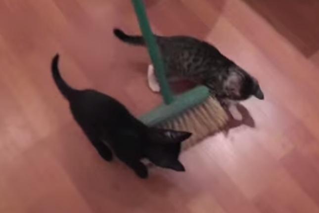 ほうきに釣られる子猫。
