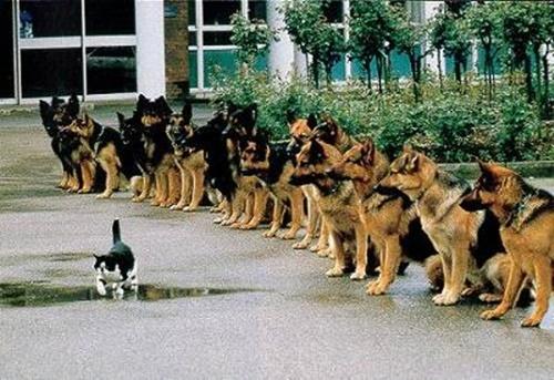 大胆すぎる泥棒猫!?
