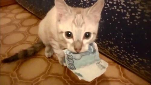本格的な泥棒猫!