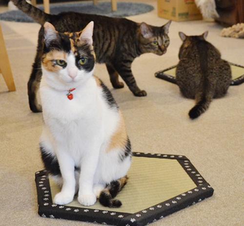 猫ホイホイ畳