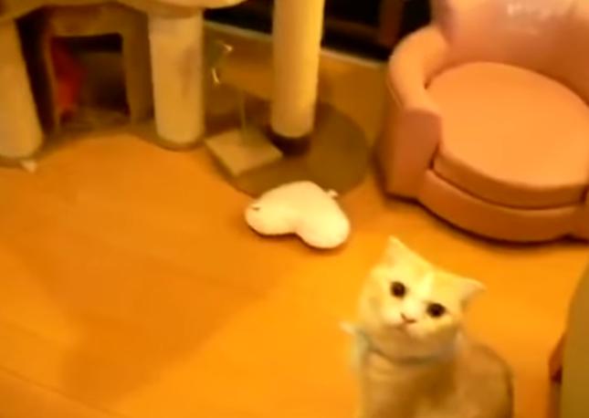 さらにそれを見てる不思議猫。