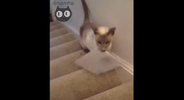 猫の郵便屋さん出動!