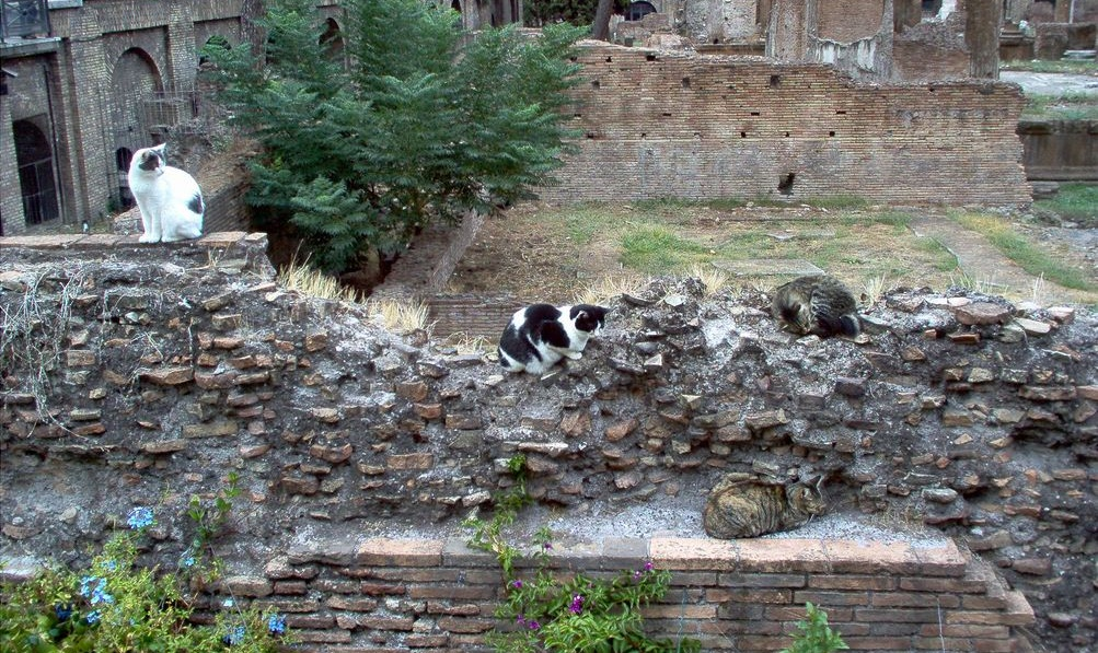 Cats-at-Largo-di-Torre-Argentina