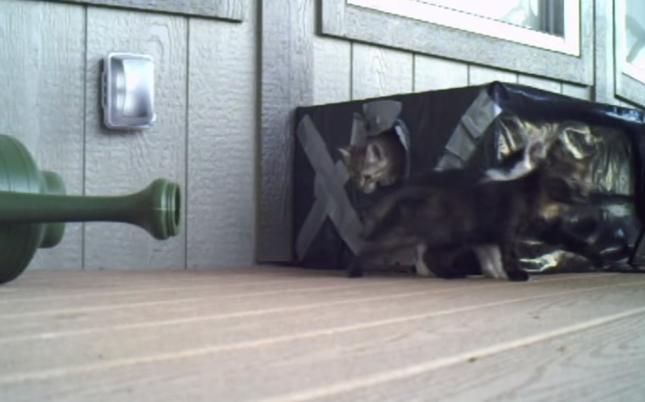 魅惑の子猫ハウス。