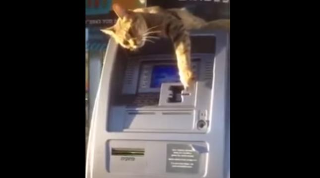 ATMの守り神?