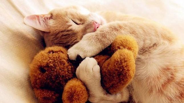 cute-animals-sleeping-stuffed-toys-7 (1)