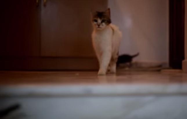 駆けつける母猫。