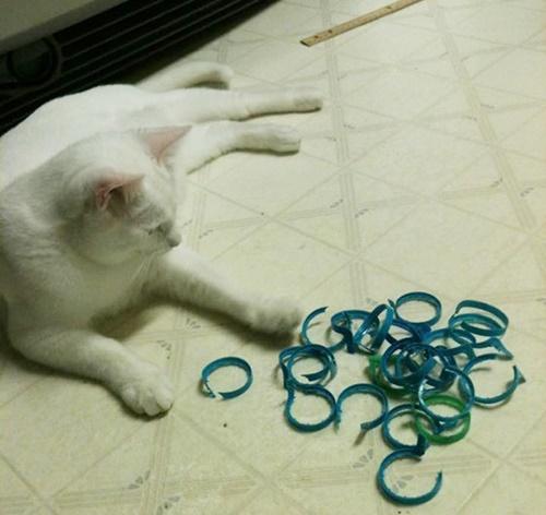 プラスチックの何か。