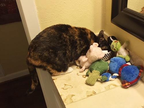 犬のおもちゃを隠し持つ。
